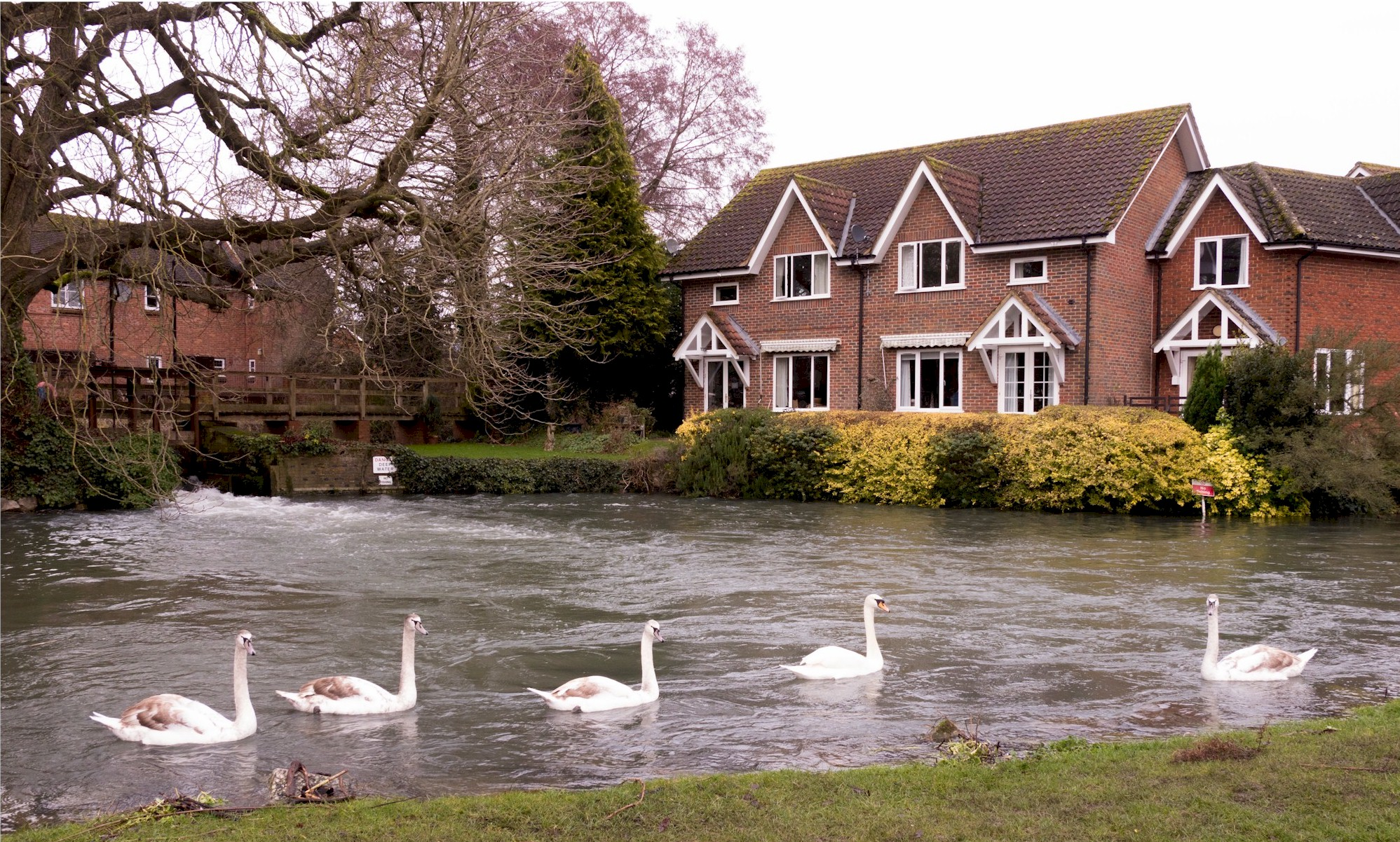 Swans On The Kennet, Town Mill